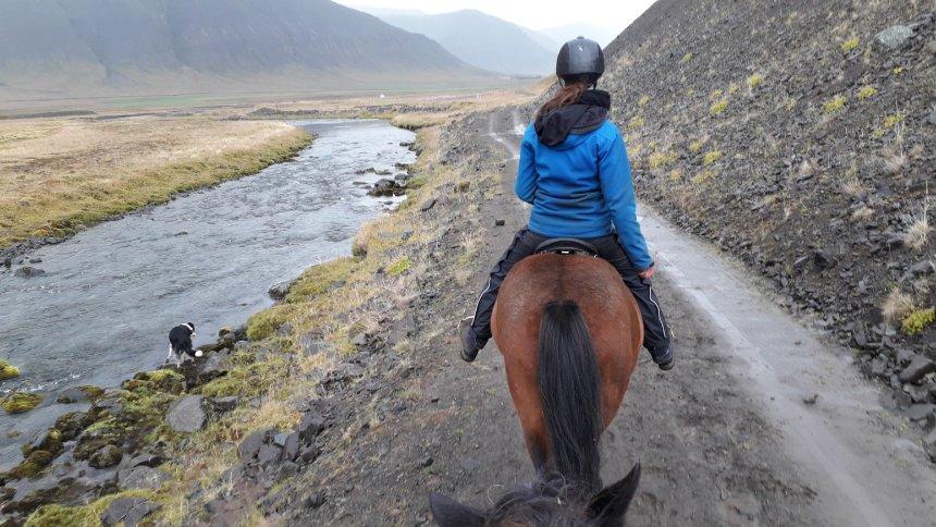 Reittour in Island: Ein Mann, ein Fjord, 24 Ponys