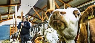 Landwirtschaft im Wandel: Milch allein macht den Bauern nicht satt