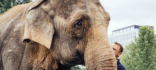 Über Zirkuselefanten