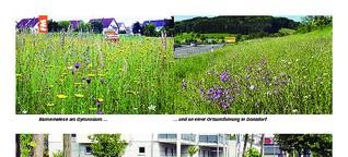 Wildblumenwiesen in der Stadt