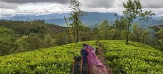 Sri Lanka und der Klimawandel - Landwirtschaft wird zum Glücksspiel