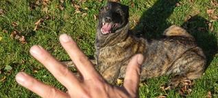 Hundeführerschein gegen Beißattacken