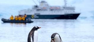 Erdölsuche belastet Tiere - Ein Hörtest für Pinguine - Deutschlandfunk