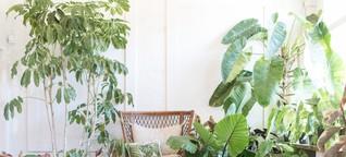 Grüne Liebe: House Plant Club