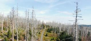 Reportage aus dem Harz: Wenn der Wald stirbt