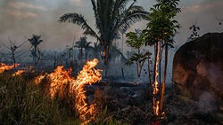 Wie wir den Amazonas retten können