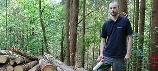 Baumschädlinge: Die wichtigsten Fragen und Antworten