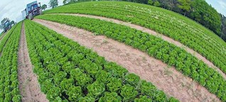 Öko-Landwirtschaft bringt dem Klima wenig