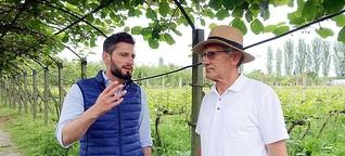 Albanien: Mit Spitzenwein gegen die Perspektivlosigkeit