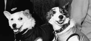 Belka und Strelka: Die vergessenen Weltraumhunde