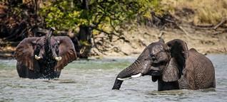 Grenzenloser Traum - Das Kavango-Sambesi-Schutzgebiet im Süden Afrikas