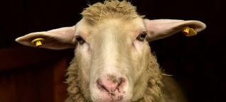Vom Milchkalb bis zum Jungstier alle ausprobiert: Bauer (30) hat Sex mit allen Tieren im Stall
