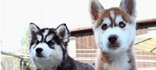 Tierisch voll: Wohin mit Hund und Katze?