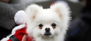 Silvester mit dem Hund - Was Experten raten