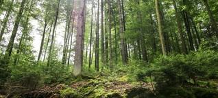 Wie die Franken ihren Wald auf die Klimakrise vorbereiten