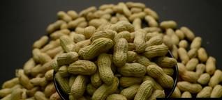 Erdnuss-Allergie: Warum das Immunsystem überreagiert