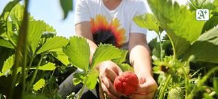 Corona-Krise: Obst- und Gemüsebauern fürchten Einbußen