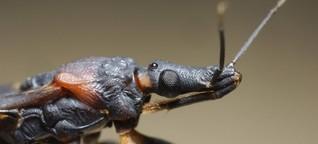Vergessene Krankheit Chagas