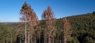 Waldbrandgefahr: Das trockene Deutschland