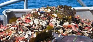 Die Überfischung der Meere soll nun mit der Blockchain bekämpft werden - WIRED Germany