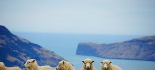 Schaf sucht Paten