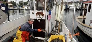 Fangquoten in der Ostsee - Ausgefischt?