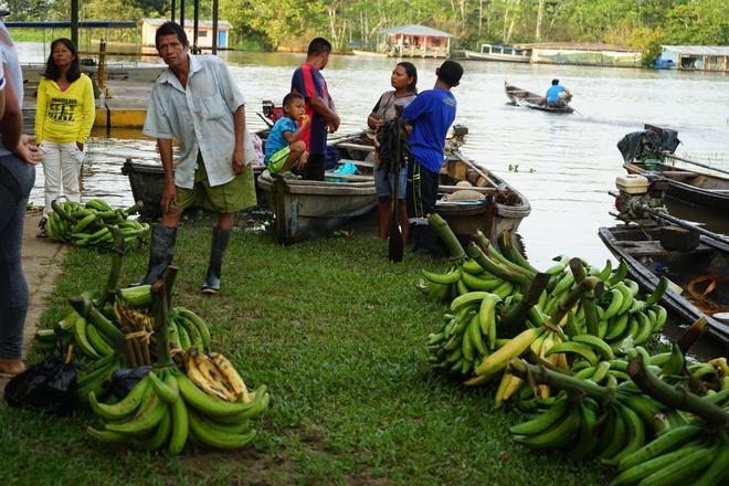 Das Bananensterben