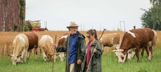 Warum es immer weniger Rinder gibt