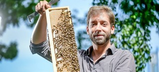 Start-ups vermieten Bienenvölker an Bauern und Firmen