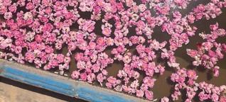 Rosenwasser in Qamsar