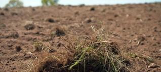 Dürre und Hitze: Was die Landwirtschaft ändern muss