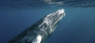 Das Schweigen der Wale