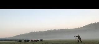 Weideschlachten: Hier sterben Rinder stressfrei