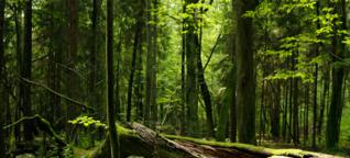 So retten wir Europas letzte Urwälder