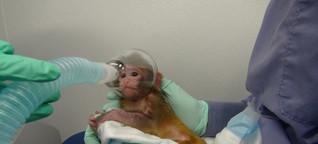 Experimente mit Affen
