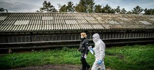 Corona-Mutation in Dänemark: Forscher warnen vor Panikmache