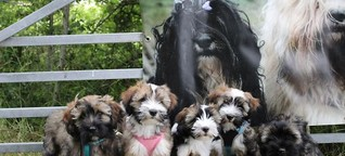 Vierbeiner-Boom während Corona: Expertinnen aus Südtondern warnen: Augen auf beim Haustierkauf | shz.de