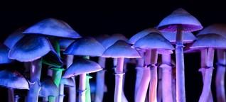 Psychedelische Medizin: Warum Investoren wie Angermayer auf Magic Mushrooms setzen   t3n - digital pioneers