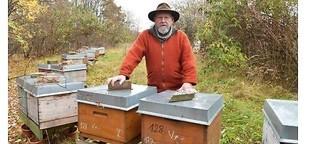 Obdachlose Bienen