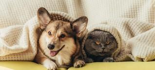 Katzen genervt, Hunde fröhlich?: Wie sich der Lockdown auf unsere Haustiere auswirkt