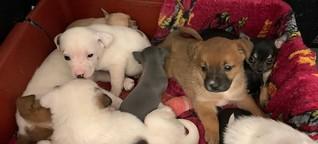 Hundeschmuggel: Bundespolizei stellt auf A17 zehn Welpen sicher | MDR.DE