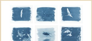 Natur Foto 02/2021: Blue Note