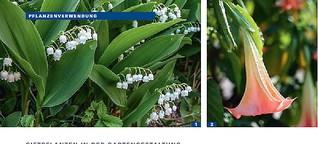 Giftpflanzen in Gärten