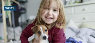 Hund, Katze, Hamster: Was Haustiere kosten - von Futter bis Tierarzt