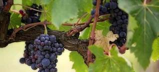 Der Prophet und der Wein