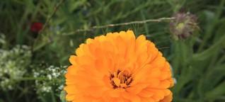 Die letzte Blume - Parabel