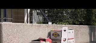Extra Öko-Box für Tetrapacks sinnvoll? - Energie-Reporter Tobias Mayr