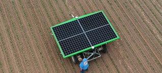 Roboter in der Landwirtschaft: Ist das eine Rübe oder kann das weg?