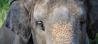 Elefanten: Eine unerwartete Reise