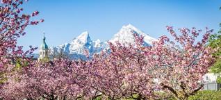 Elf Orte in Deutschland, um die Kirschblüte in voller Pracht zu erleben